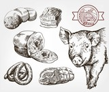 The head of a pig. Natural meat products. Animal husbandry. Set of vector sketches against gray - 165644748