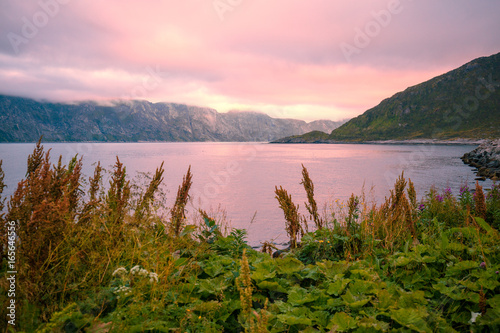 Fjord, rocky beach at pink rose sunset, nature Norway. Senja island. Beautiful bay with blossoming flowers.