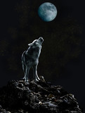 Samotny wilk śpiewa swoją smętną piosenkę na Księżycu