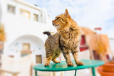 Cat in summer town