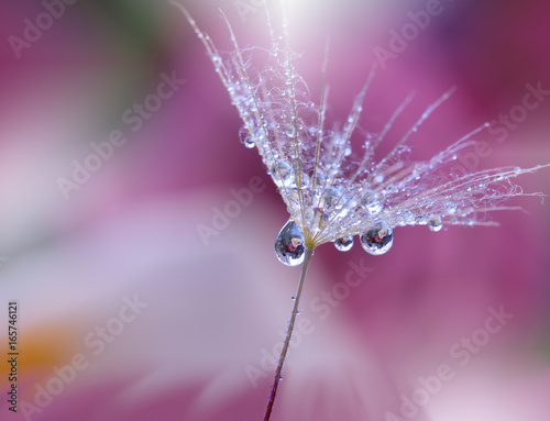 Abstract macro photo with water drops.Artistic Background for desktop. Flowers made with pastel tones.Tranquil abstract closeup art photography.Print for Wallpaper...Floral fantasy design..