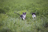 Feral kittens in a field in rural Indiana