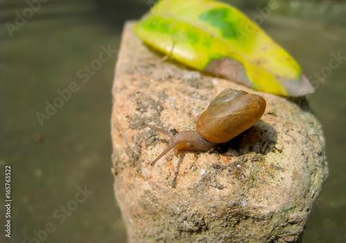 Foto op Aluminium Oranje Snail