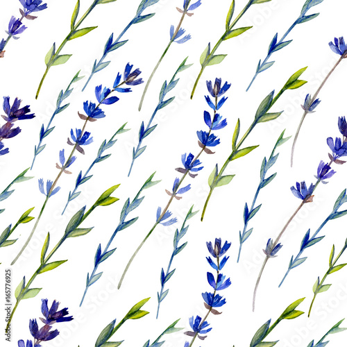 Watercolor blue lavender wild flower isolated on white, seamless pattern, decorative background, botanical hand drawn painting texture for design package cosmetic, greeting card, wedding invitation - 165776925