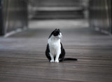 Black and white cat outoor