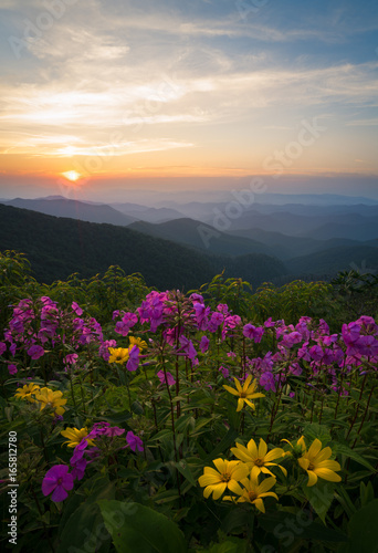 obraz lub plakat Wildflowers blooming in the Blue Ridge Mountains