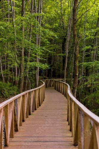 Foto op Canvas Weg in bos Cantabria - Bosque de Hayas