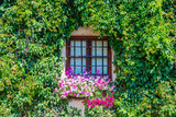 An old wooden window. The facade of an English house in colors. English garden. Background. Summer. Sunny day. Flower.