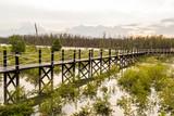 Mangrove forest bridge