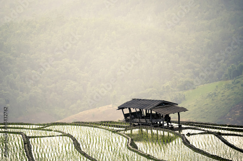 Tuinposter Rijstvelden Terraced Paddy Field in Mae-Jam Village , Chaingmai Province , Thailand