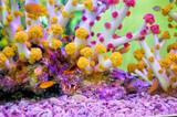 colorful orange and coral in clear quarium