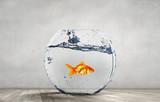 Goldfish jumping from aquarium - 165861321