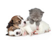 Kitten on a group of sleeping puppies Jack Russell. isolated on white background - 165866113