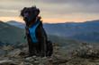 Black Dog on Mountain Summit