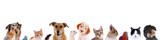 Tierköpfe verschiedener Haustiere in einer Reihe