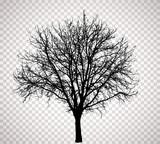 transparent tree 4016