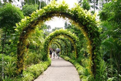 Arche végétale jardin botanique. Poster