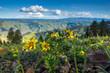 Quadro Blumen im Hells Canyon, Idaho