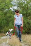 Mature woman is walking a dalmatian dog on a leash  in nature environment
