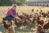 female farmer looking for eggs - 165940902