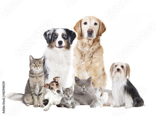 Hunde Katzen freigestellt Poster