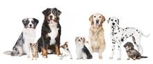Verschiedene Hunde Sticker