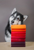 Pensive dog sitting next to books