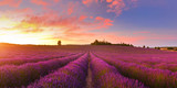 Lavender field - 166019760