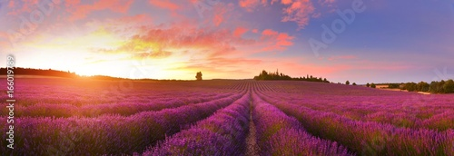 Keuken foto achterwand Crimson Panorama of lavender field at sunrise, Provence, France
