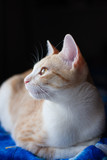 side view of tabby cat