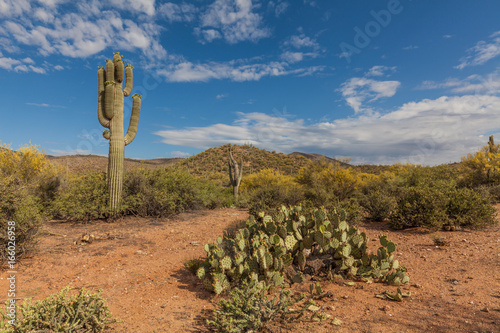 Scenic Arizona Desert Landscape