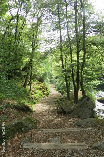 Foto op Canvas Weg in bos Chemin forêt