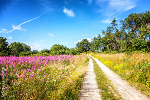 Beautiful landscape. The path in the woods on a blossoming meadow