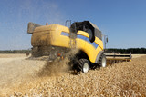 Combine harvests wheat on a field in sunny summer day - 166084754