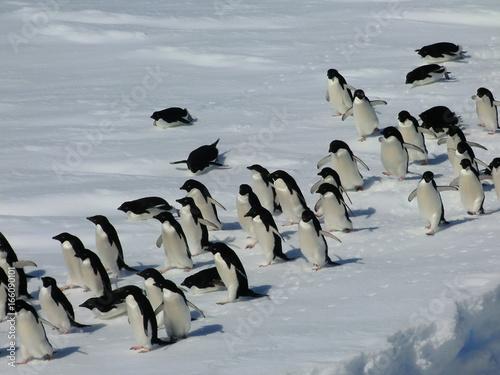 Antarctic-Adélie002