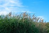 close up di una foresta di canne di bambù con il cielo blu