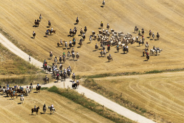Transhumance of cattle in Spain during the summer
