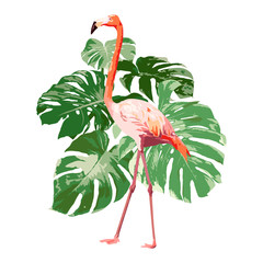 pink flamingo with green tropical monstera leaf illustration, bird vector on white background