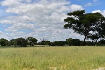 The savanna in Tanzania.