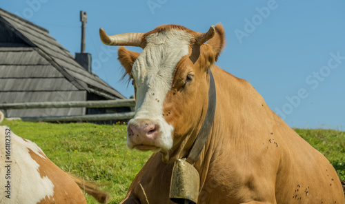 Aluminium cows head with horns close-up and shepherd wooden house in background