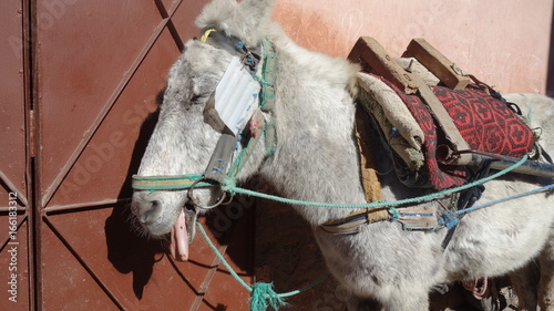 Ein Esel in Marokko