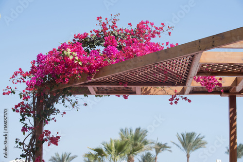 Blooming bush plant with pink flowers enlace with wooden roof
