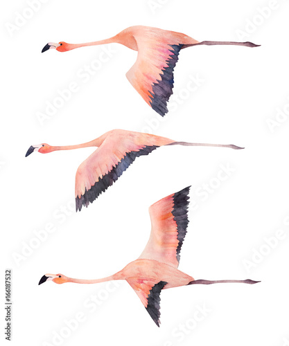 A flying flock of flamingo. Watercolor isolated illustration.  Hand drawn print - 166187532