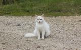Белая кошка сидит на камнях