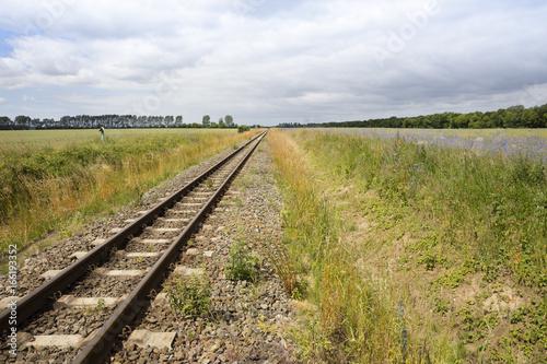 Eisenbahnschiene durch Feld mit Kornblumen, (Centaurea cyanus), Mecklenburg-Vorpommern, Deutschland, Europa