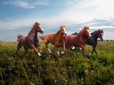 Rapid running of free horses on blossoming grass - 166204908