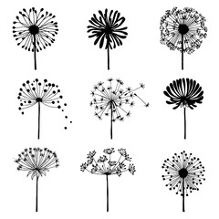 Set of doodle dandelions. Decorative Elements for design, dandelions flowers blooming.