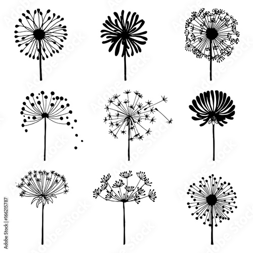 Set of doodle dandelions. Decorative Elements for design, dandelions flowers blooming. - 166215787