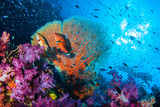 Piękna rafa koralowa z ryby szkolne wszystkie kolorowe w wyspie Similan, Tajlandia, nurkowanie podwodne Podwodne koncepcji seascape.