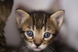 Babycat_011